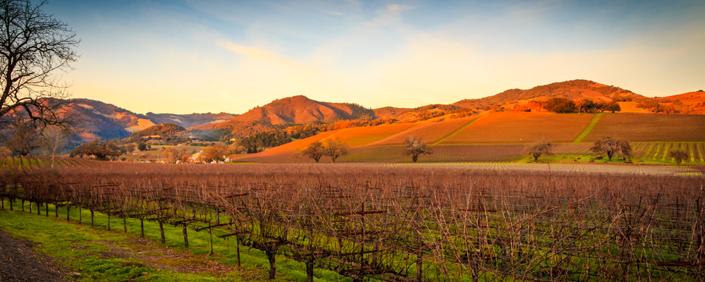 Vineyards of Sonoma, California
